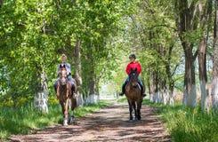 Horse ride. Royalty Free Stock Photos