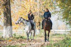 Horse ride Royalty Free Stock Image