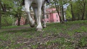 Horse Ride stock video
