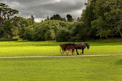 Horse ride in Killarney National Park Royalty Free Stock Images