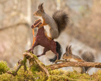 Horse ride. Red squirrels standing with horses Stock Photo