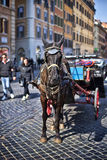 Horse ride at Spanish steps, Rome Royalty Free Stock Photos