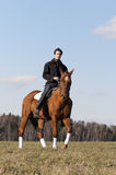 Horse Rider. Young man riding a horse in the fields by the countryside Stock Photo
