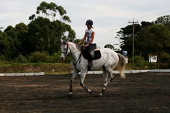 Horse and rider. Working together in the training arena Royalty Free Stock Photo