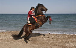 Horse and Rider Royalty Free Stock Image