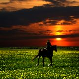 Horse rider. In green dandelion field Stock Photography