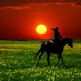Horse rider. In green dandelion field Royalty Free Stock Image