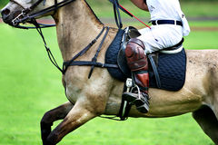 Horse and rider. Horse polo player in detail Royalty Free Stock Image
