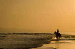 The horse rider on the beach Royalty Free Stock Image