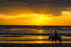 Horse Rider on a Beach Stock Image