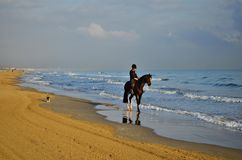 Horse rider on the beach Valencia Spain royalty free stock photo