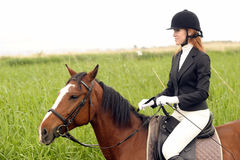 Horse with rider Stock Image