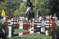 Horse and rider clearing hurdle in American Caf� Grand Prix, Howard Community College, Columbia, Maryland Royalty Free Stock Photos