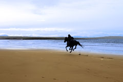 Horse and rider galloping along the coast Royalty Free Stock Images