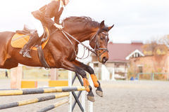 Horse with rider girl on show jumping competition. Bay horse with rider girl jump over the oxen on show jumping competition Royalty Free Stock Images