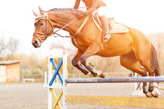 Horse with rider girl on show jumping competition. Sorrel horse with rider girl jump over hurdle on show jumping competition Royalty Free Stock Image