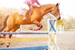 Horse with rider girl on show jumping competition. Sorrel horse with rider girl jump over hurdle on show jumping competition Stock Photography