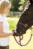 Horse rider and horse Royalty Free Stock Photos
