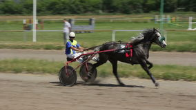 Horse and rider on a horse race at the track stock video footage