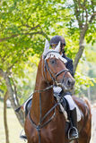 Horse. The rider on the horse. A woman rider in the forest on a bay horse stock image