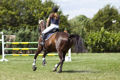 Horse and rider in jump course Stock Image