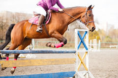 Horse with rider jump over hurdle on show jumping. Sorrel horse with rider girl jump over hurdle on show jumping competition Stock Photo