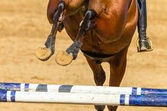 Horse Rider Jump Rear Legs Closeup Hoofs Shoes Poles. Equestrian Show jumping horse closeup rear behind photo of animals feet shoes flight over gate poles stock photos