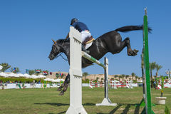 Horse and rider jumping in equestrian competition Stock Images