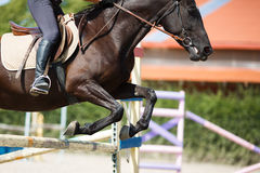 Horse rider jumping Stock Photography