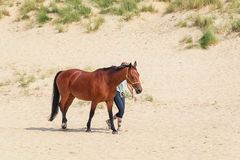 Horse with rider on the North Sea Texel beach Stock Photography