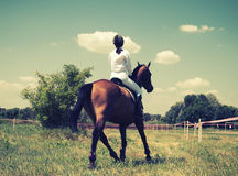 Horse and rider Stock Photography