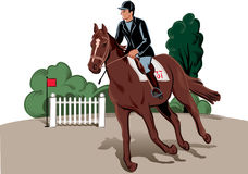 Horse and rider in the race. Horse and rider during a jumping competition hurdles Stock Photos