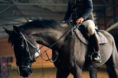 Horse rider on a horse in a riding arena royalty free stock photo