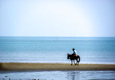 Horse and rider roaming on a beach. Horse and rider on a sand spit on Digha Beach. This is a very popular tourist destination and is visited by hundreds of Stock Photography