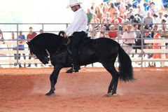 Horse and rider at the rodeo Royalty Free Stock Image