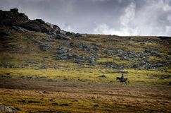 Horse rider on rugged open plains royalty free stock image