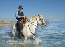 Horse rider in the sea Stock Images
