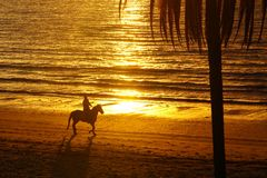 Horse rider, South Pacific ocean beach sunset. Horse rider on beach at sunset at Nadi Fiji Royalty Free Stock Photos