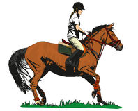 Horse rider Stock Image