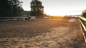 Horse rider at sunset. Young jockey brave girl riding horse jumping stock footage