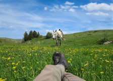 Horse and rider take a break Stock Images