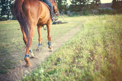 Horse with rider is on a track field, space for text Royalty Free Stock Photography