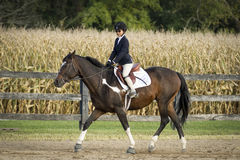 Horse and Rider trotting Stock Photos