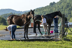 Horse riders cleaning horses Stock Images