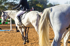 Horse Riders Equestrian Abstract Stock Photo