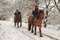 Horse riders in the Forest. Horse riding in Romania is not only a tourism feature, but also a traditional routine in many villages. Hoping onto a horse is not a Stock Images