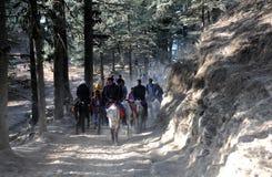 Horse riders at Kufri near Shimla, India