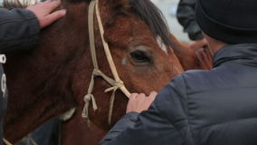 Horse and riders. Locals prepare a horse for performance. Festival golden eagle hunting