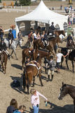 Horse riders in preparation royalty free stock images