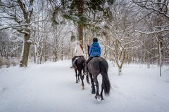 Horse riders at snowy weather. Two riders on the horses at beautiful winter snowy forest. Back view Royalty Free Stock Photo